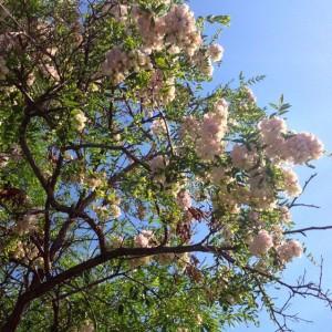 Seed Tree II