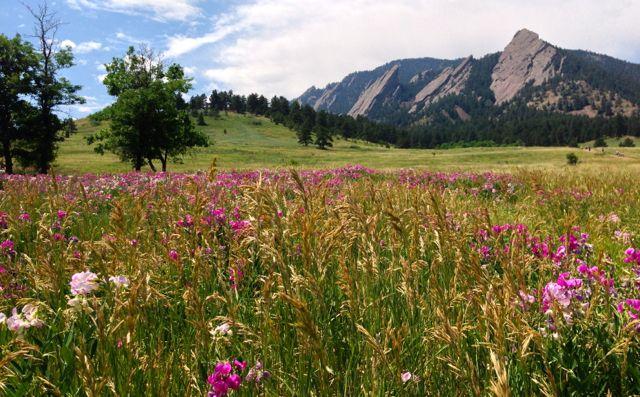 Fairy Meadow II