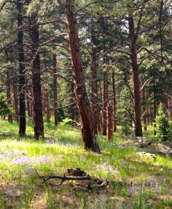 Chautauqua Pines