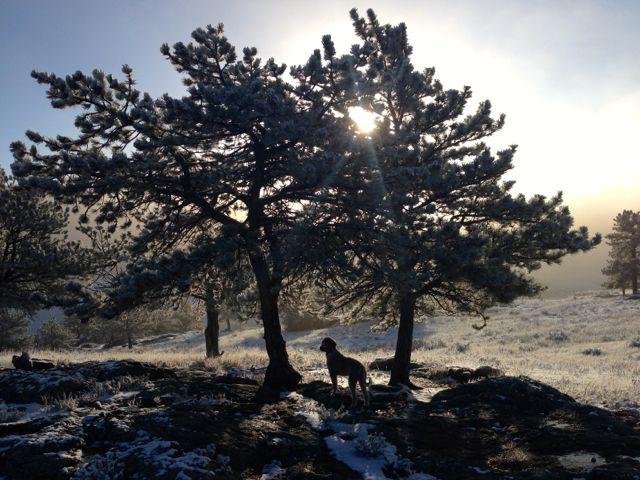 Sun and Pine